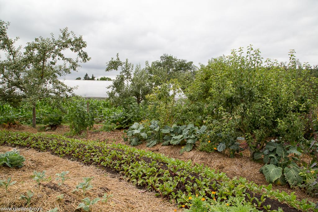 Diferite legume şi flori plantate printre pomii fructiferi