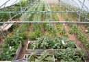 În vizită la Bec Hellouin (Franţa) – una dintre cele mai renumite ferme ecologice şi de permacultură din lume