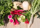 Cum cultivăm diferite soiuri de ridichi în grădină