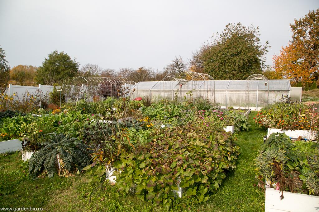 Grădina cultivată biointensiv, în toamnă.