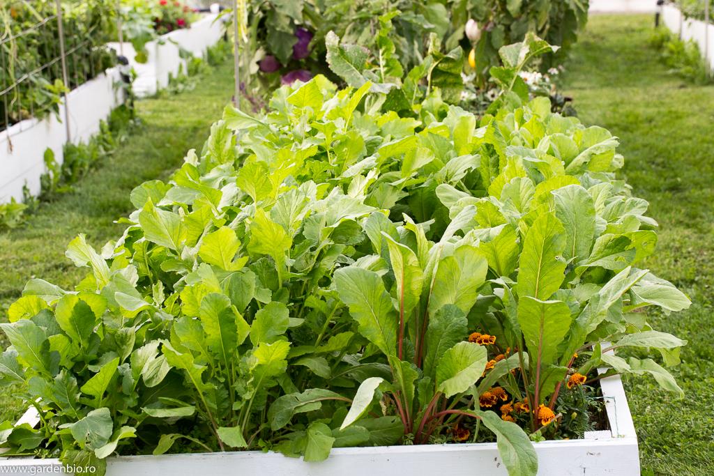 Distanţa mică dintre plantele cultivate nu permite buruienilor să crească, deci muncă mai puţină.