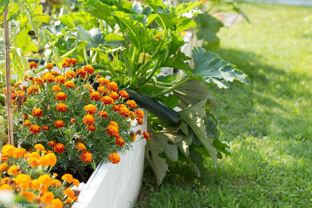 Crăițele - cele mai bune plante companion din grădină