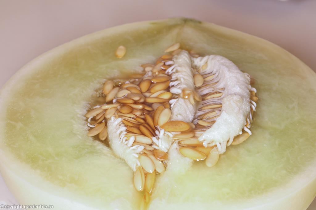 Pulpa foarte zemoasa si dulce a pepenelui galben Honeydew Green Flesh