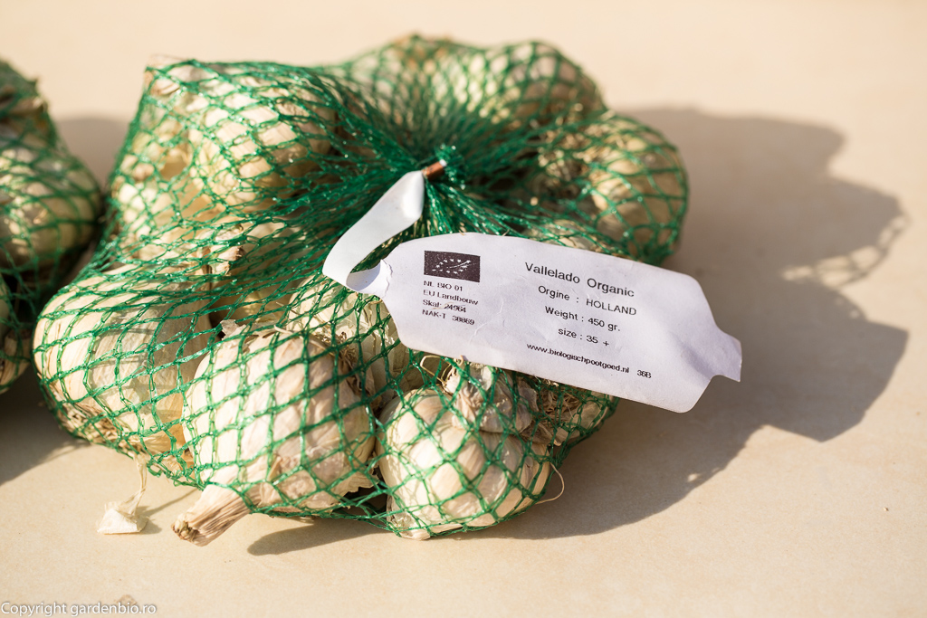 Usturoi organic softneck Vallelado