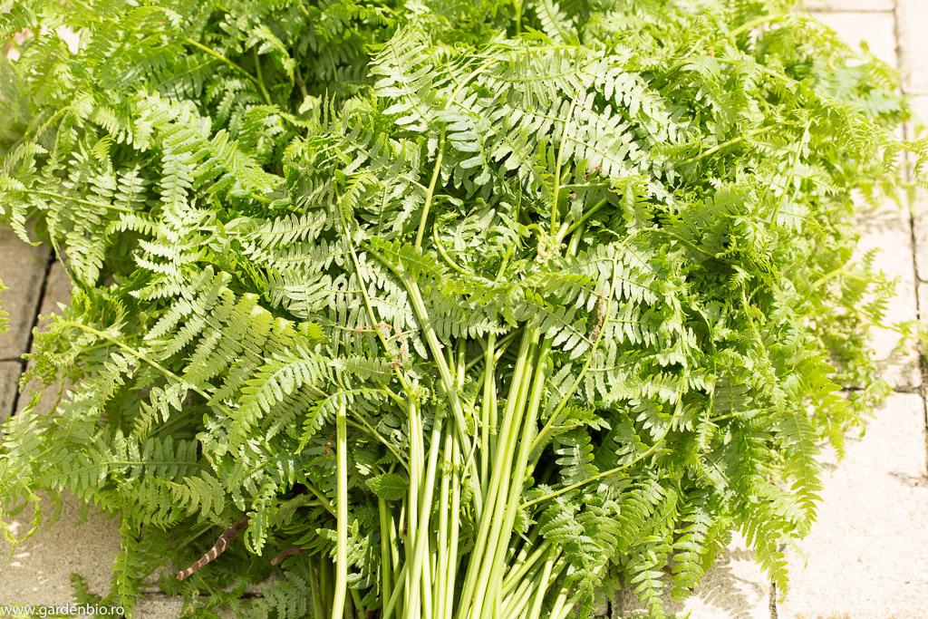 Feriga pentru extract vegetal