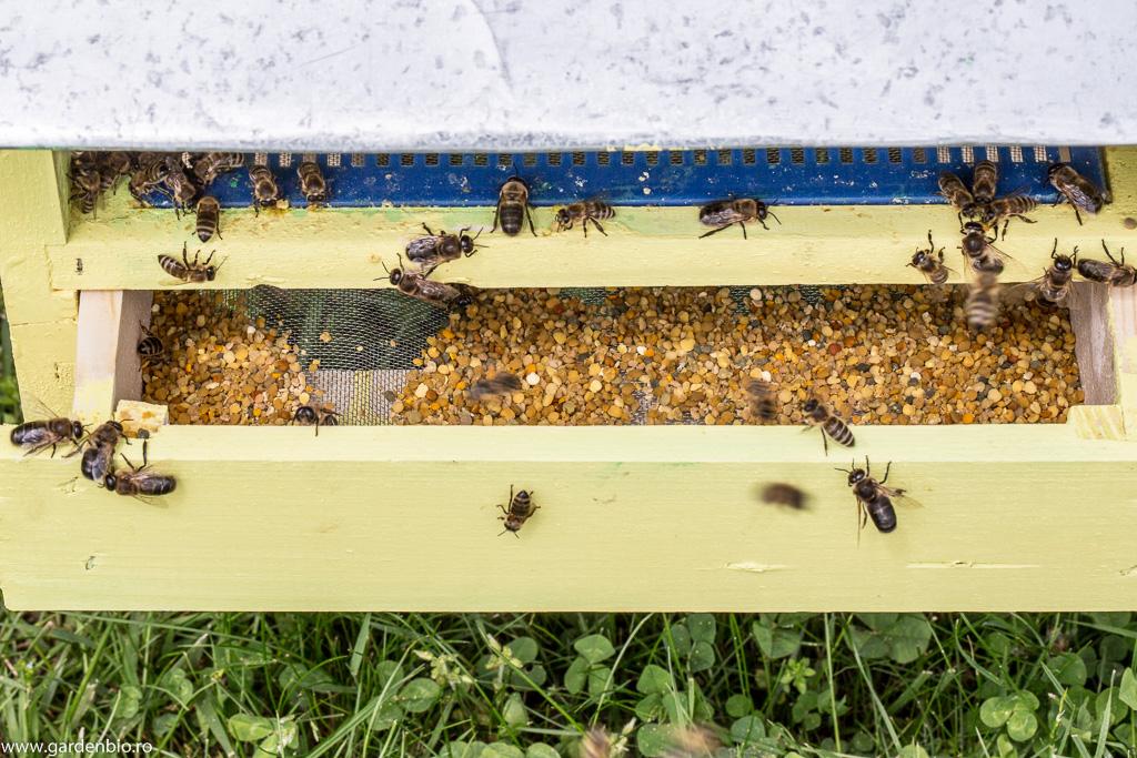 Colector de polen amplasat la intrarea în urdinișul stupului