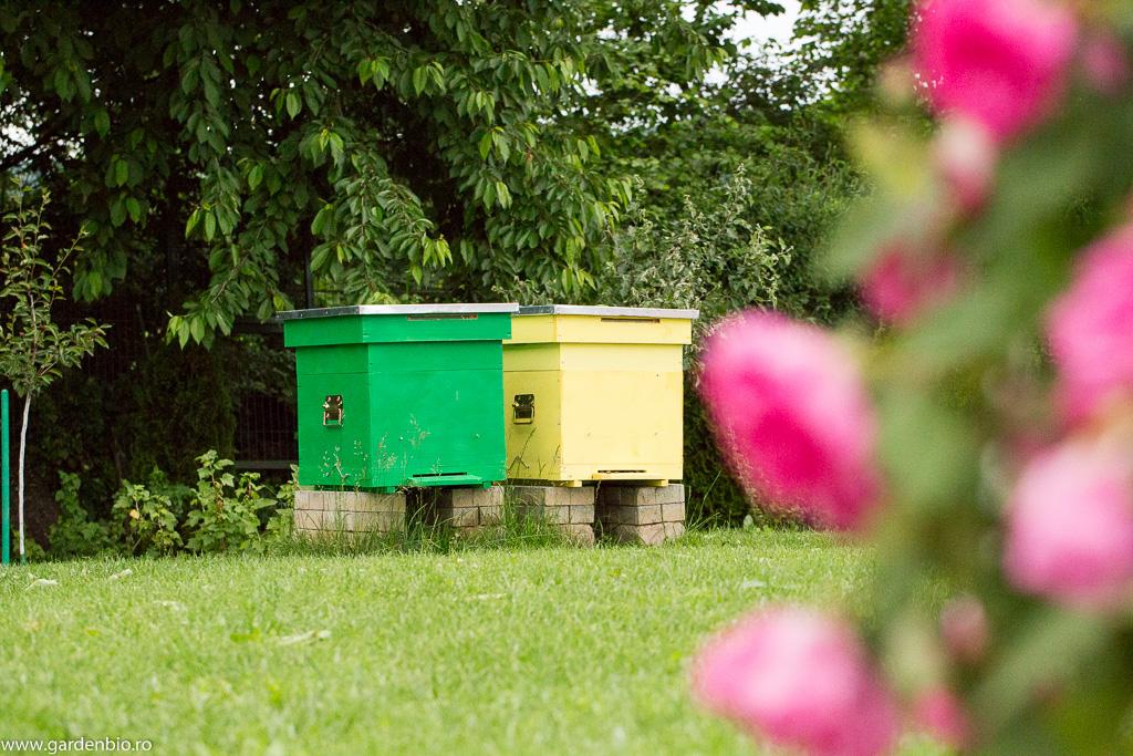 Primii stupi de albine