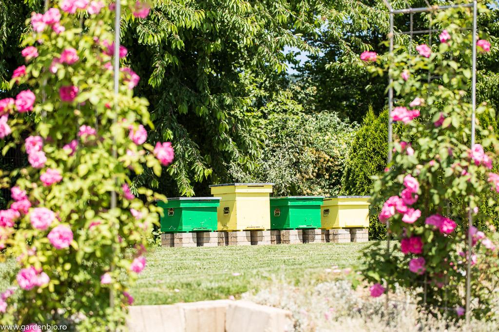 Cei 4 stupi din prezent, 3 activi si unul pregatit pentru o noua familie de albine