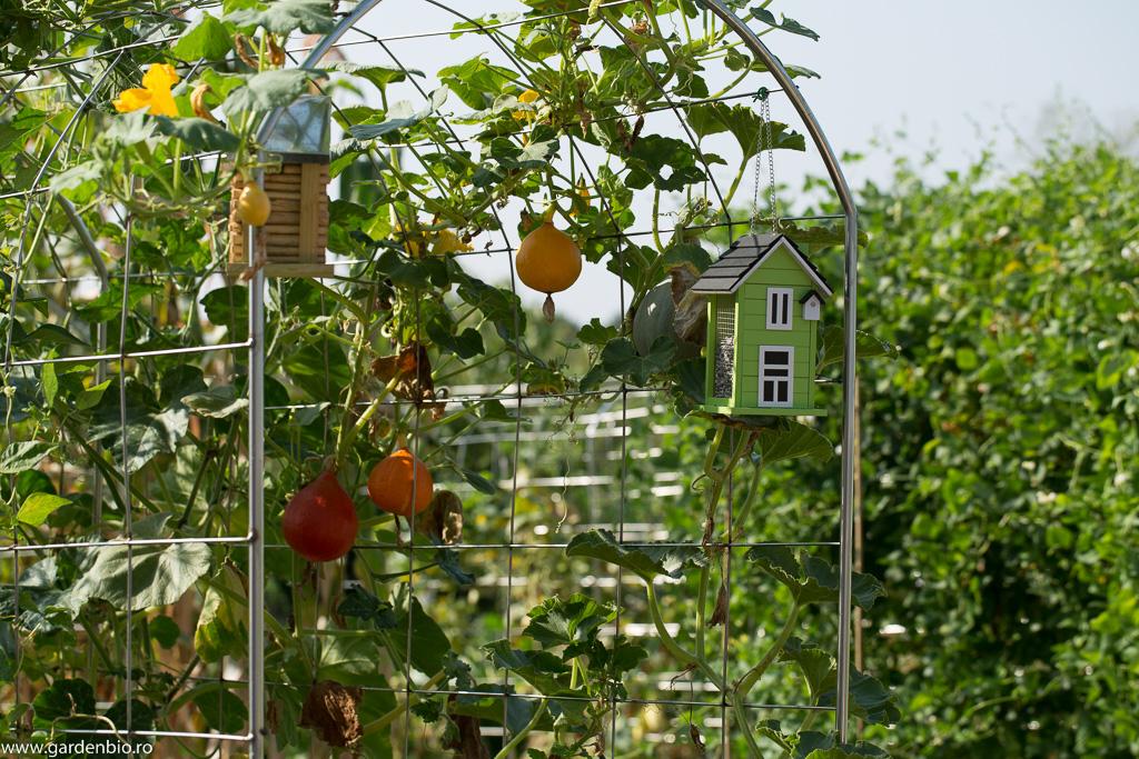 Căsuță de păsări în grădina de legume