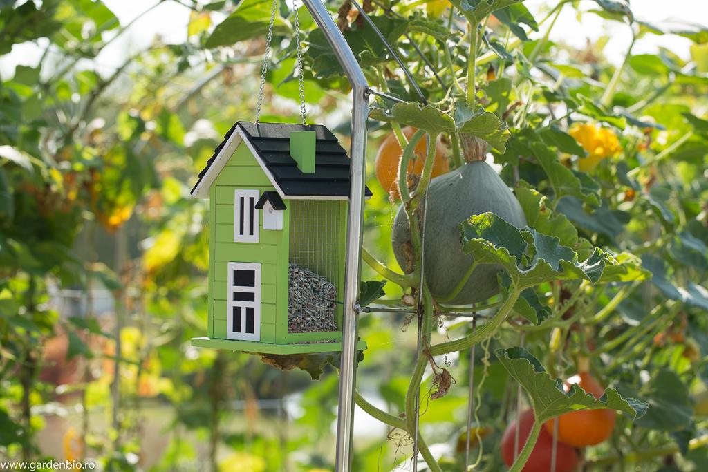 Căsuță de păsări cu semințe în grădina de legume