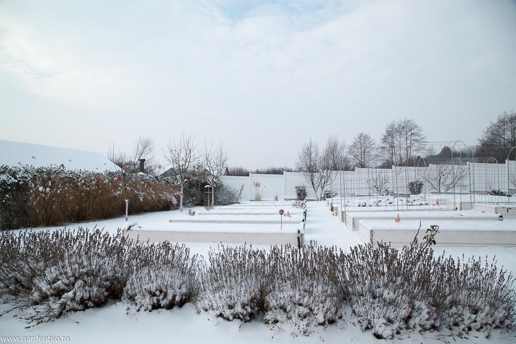 Straturile raised beds acoperite cu zăpadă