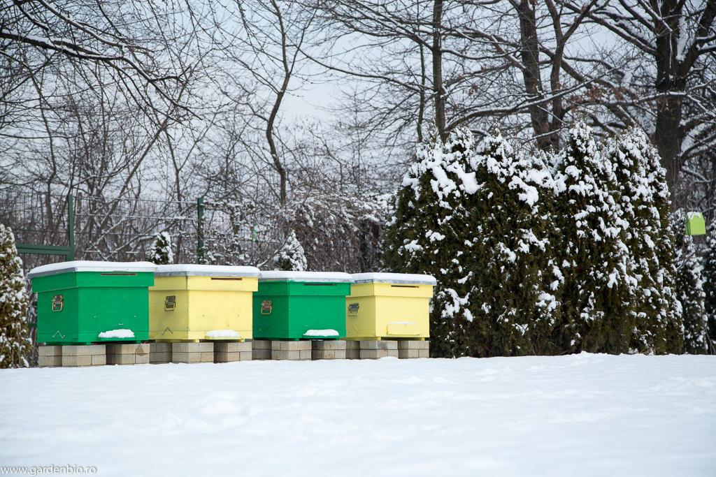 Stupii cu albine