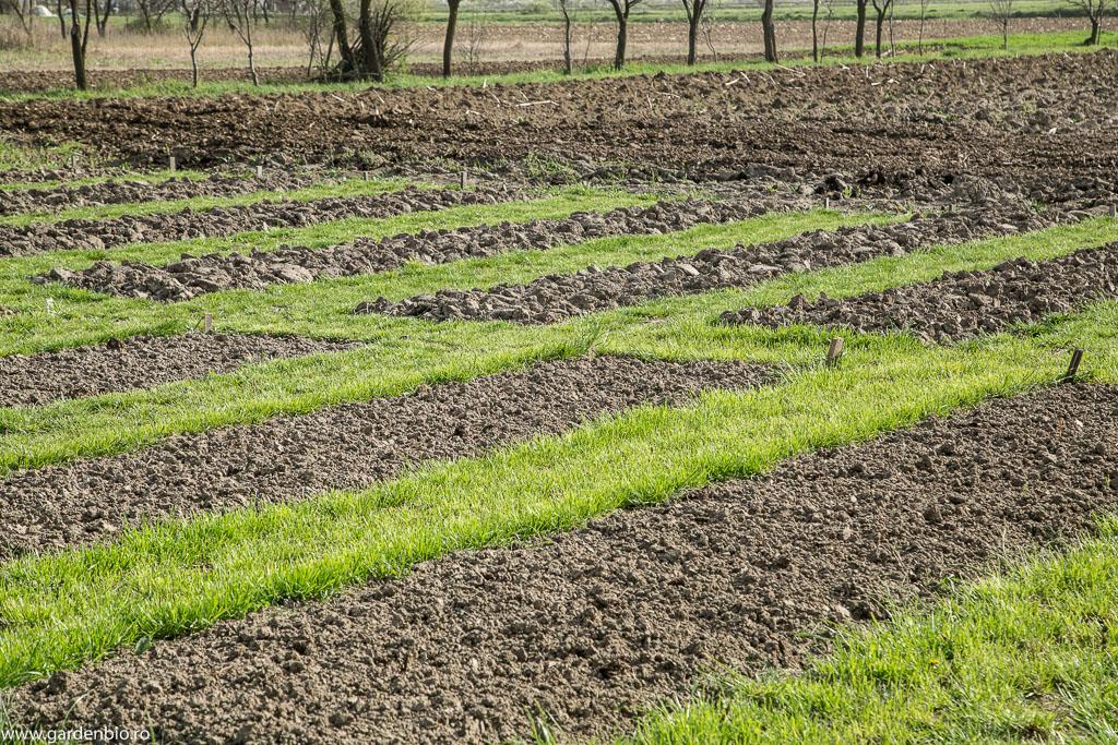 Straturile săpate și mărunțite - urmează solul din pădure