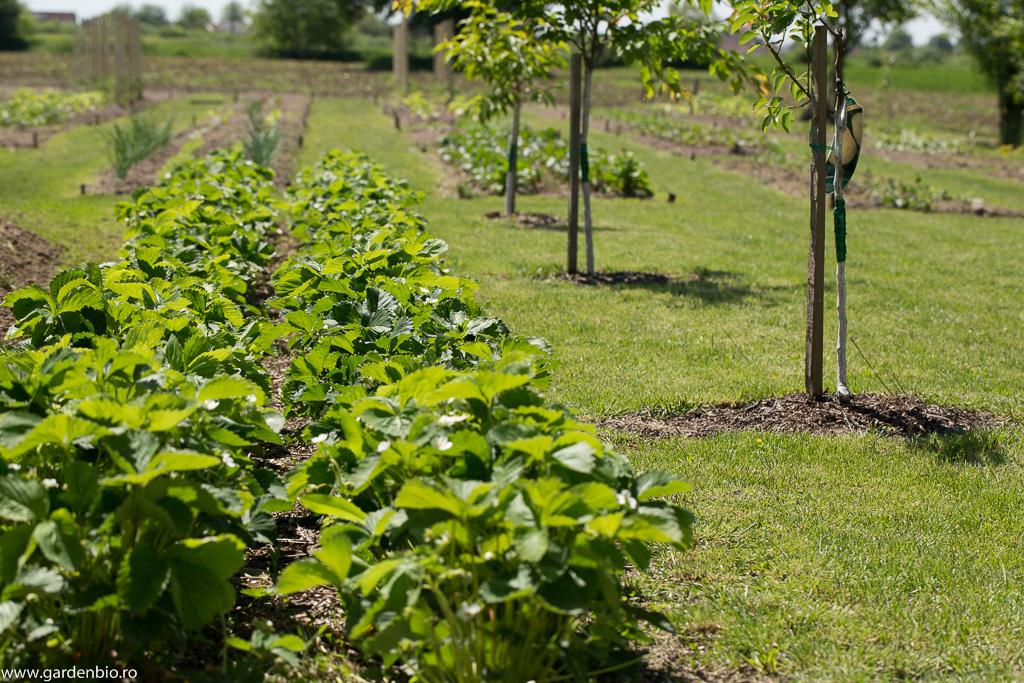 În locul grădinii vechi s-a semănat gazon, s-au plantat pomi fructiferi și căpșuni