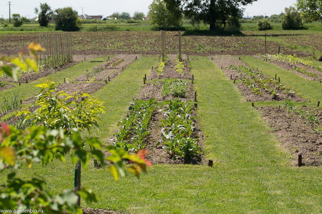Straturi din grădină