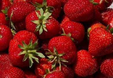 Soiuri de căpșuni cultivate în grădină