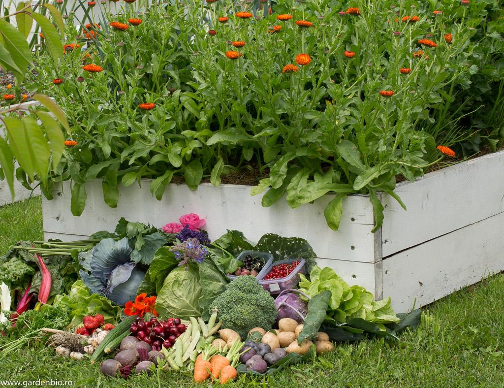 Recoltă din grădină la început de iunie