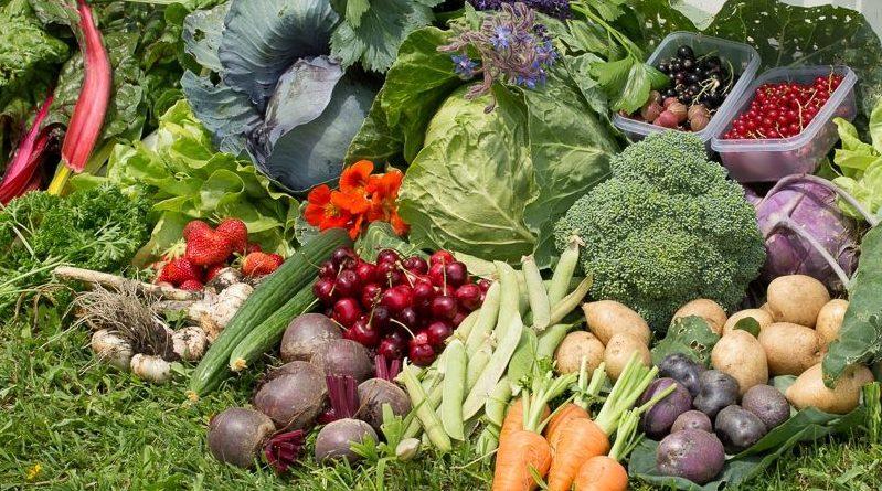 Grădină de 100 mp cu legume ecologice, suficiente pentru o familie