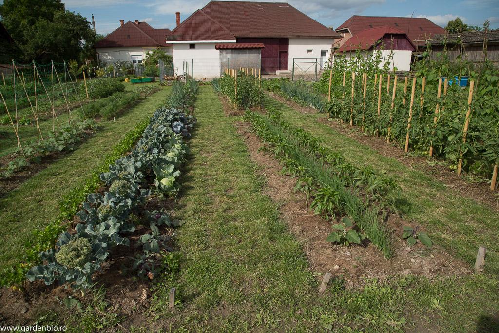 Brocoli, gulii, ardei , ceapa pt. arpagic, rosii