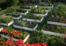 Proiectarea grădinii – straturi înălțate (raised beds)