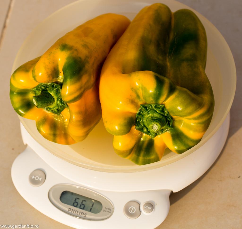 Ardei Yellow Monster 2 bucăți de 661 grame !