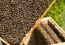 Primii stupi de albine din gradina