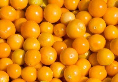 Physalis peruviana – fructe delicioase si sanatoase