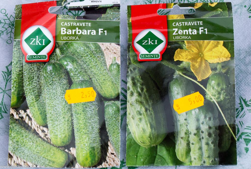 Seminţe hibrid F1 de castraveţi