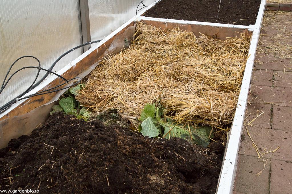 Straturile înălţate din seră le umplu cu gunoi de cabaline, paie, resturi vegetale