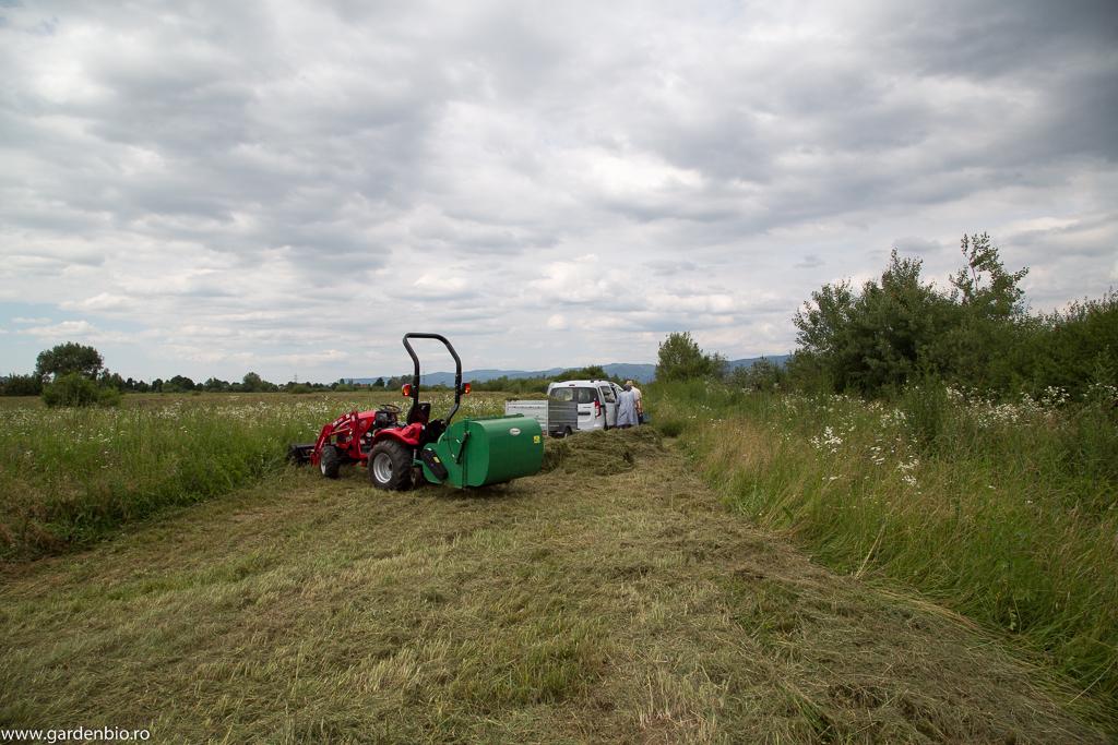 Iarbă tăiată și mărunțită (cositoare cuplată la priza de putere a tractorului, cu înmagazinare) pentru compost.