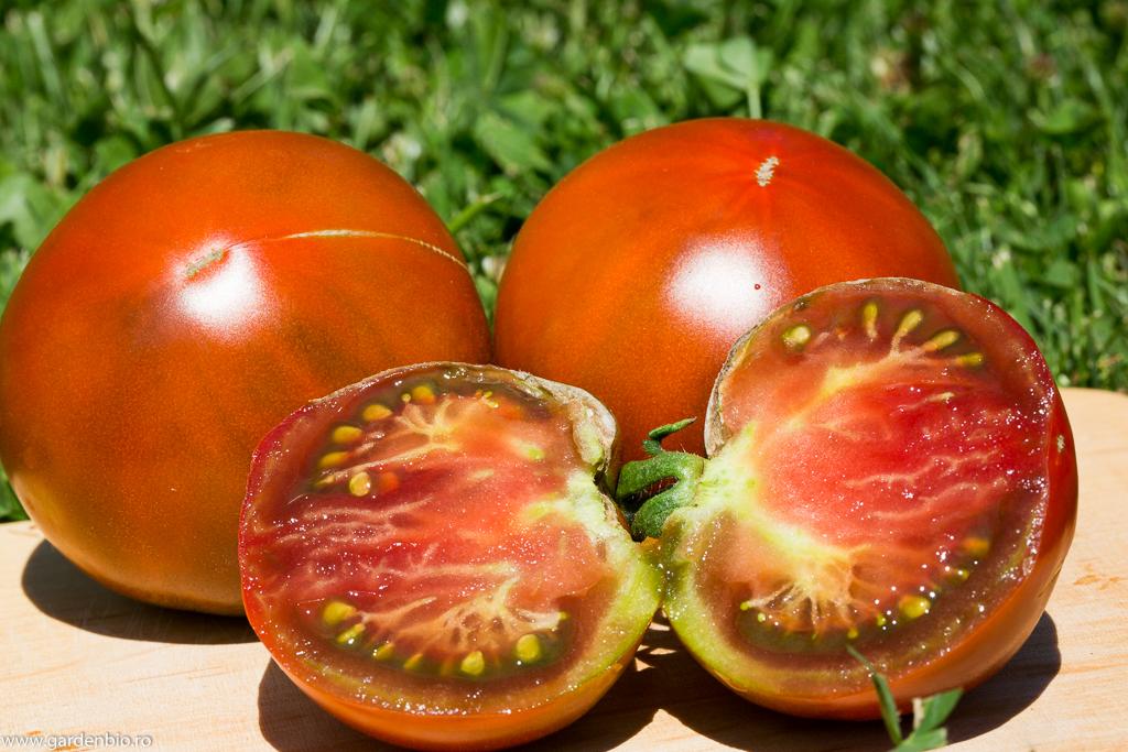 Tomate Black Giant