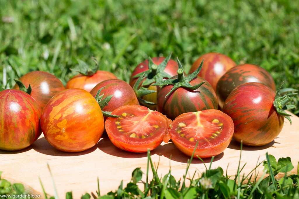 Tomate Black Vernisage