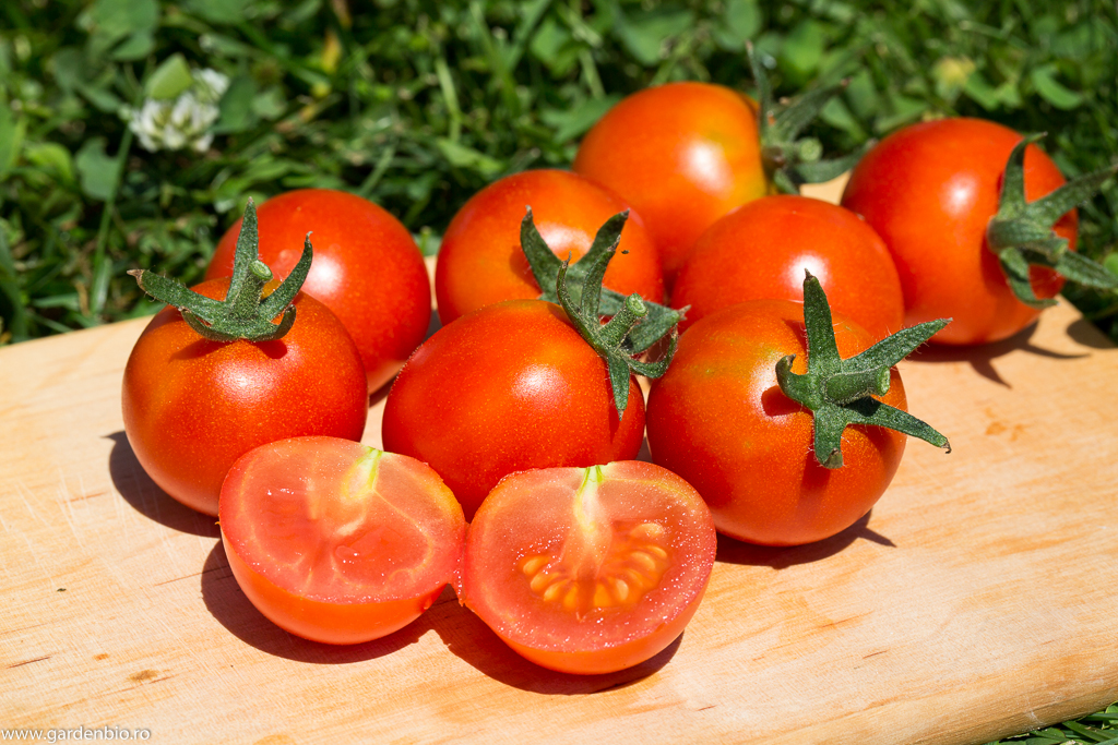 Tomate Mexican Honey