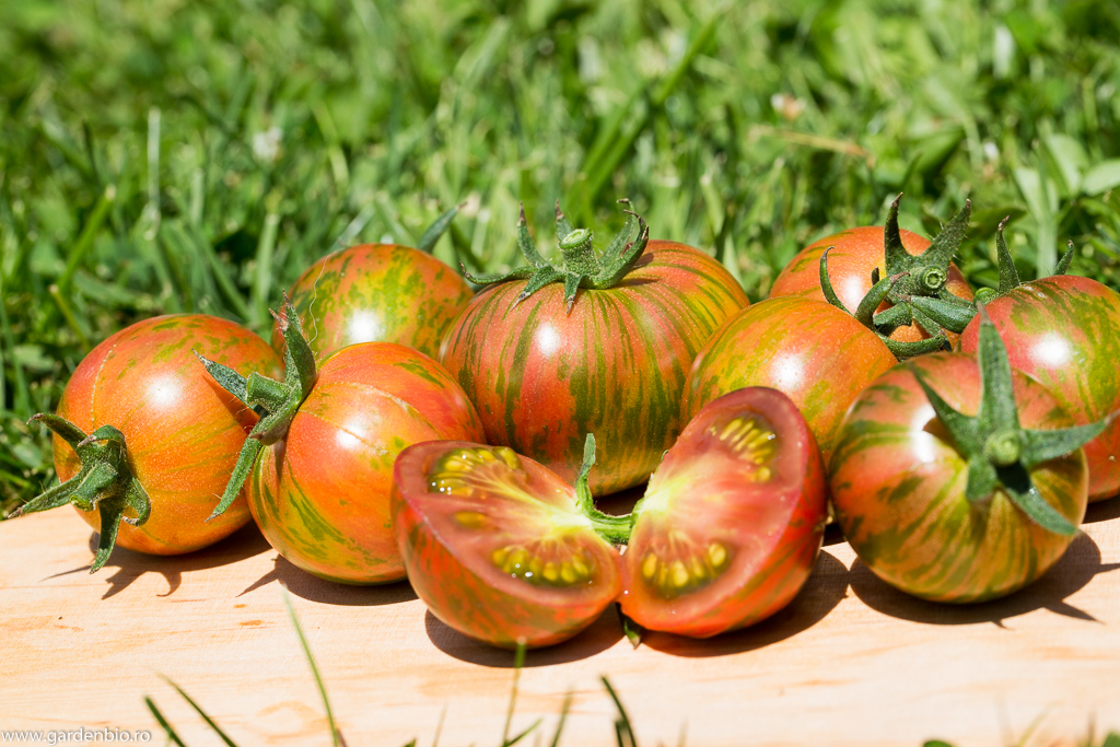 Tomate Purple Bumble Bee