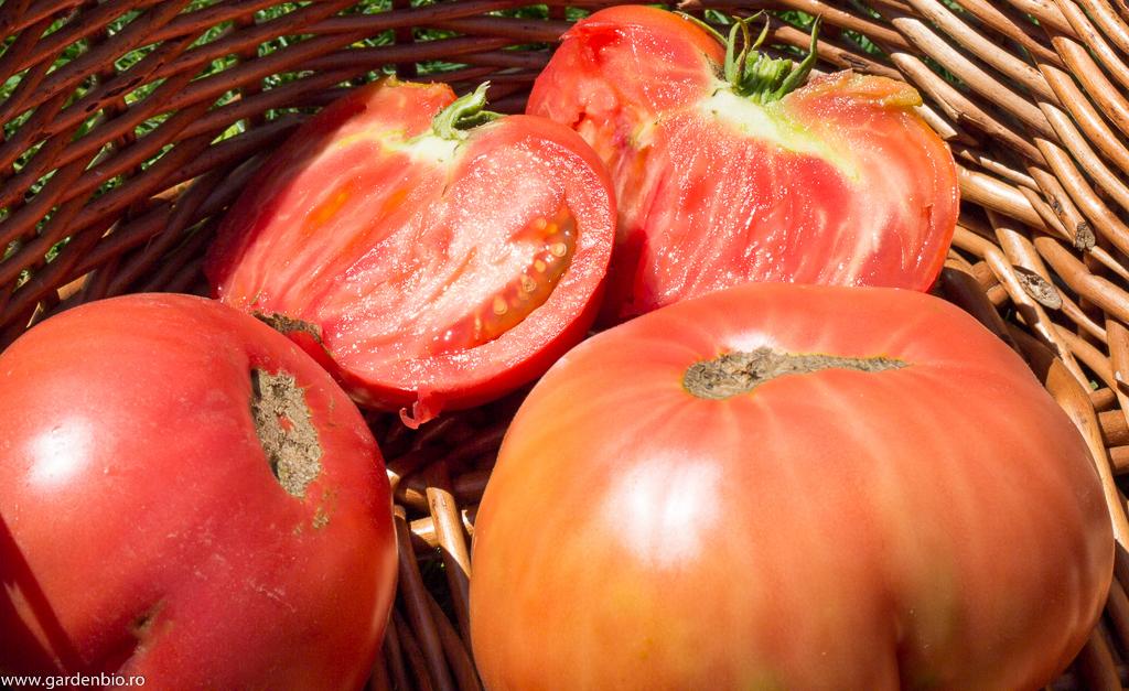 Tomate roz tradiționale din lunca Someșului, cultivate în zonă de peste 50 de ani !