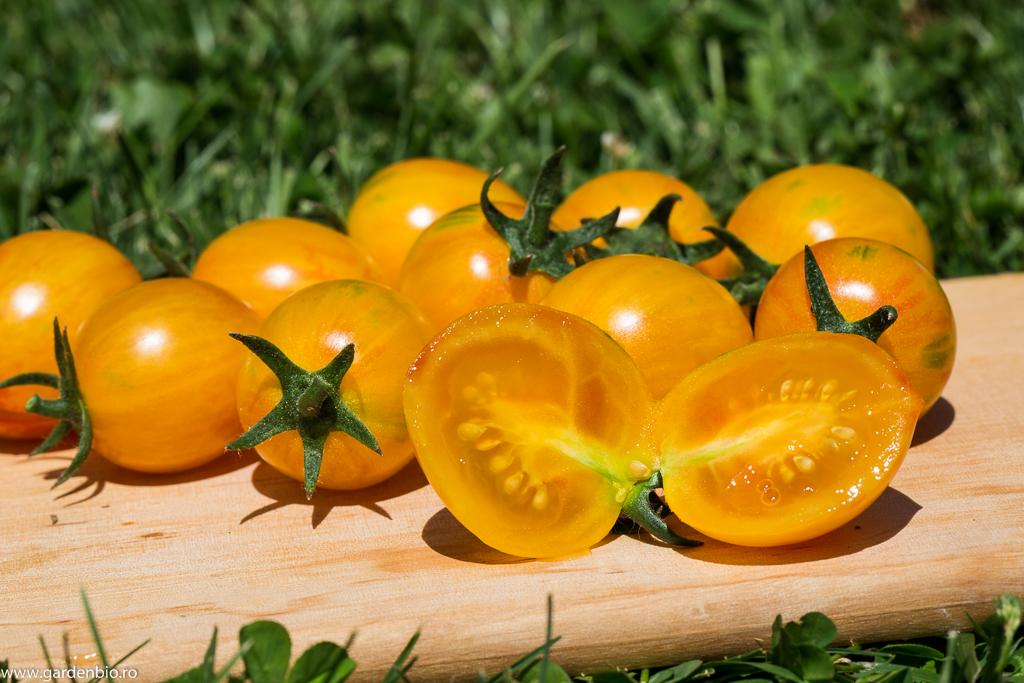 Tomate Sunrise Bumble Bee