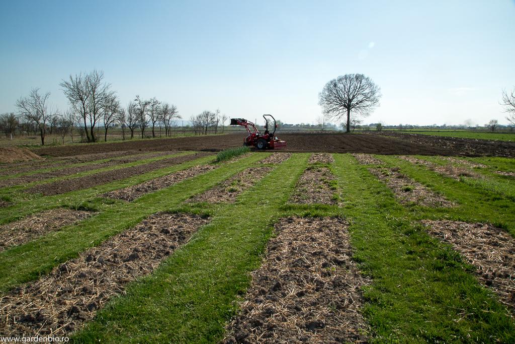 Primăvara 2017 - straturile realizate în 2016 au fost mulcite cu paie peste iarnă, pentru protejarea microorganismelor din sol