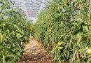 Grădina de la țară – de la pasiune la o mică afacere de familie