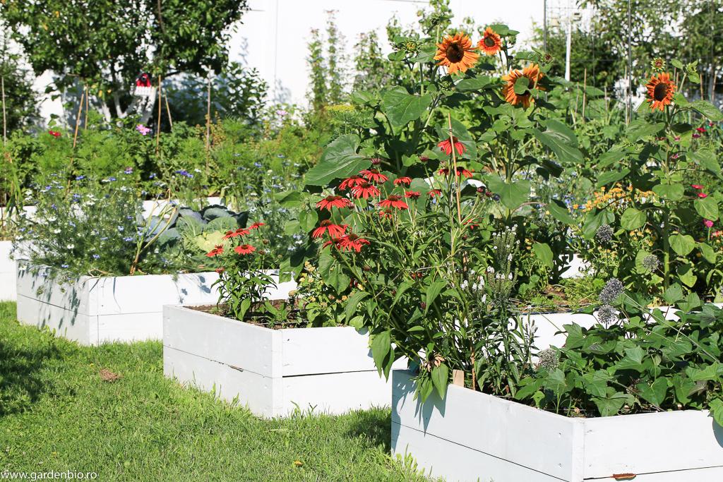 Grădina cu flori pentru polenizatori