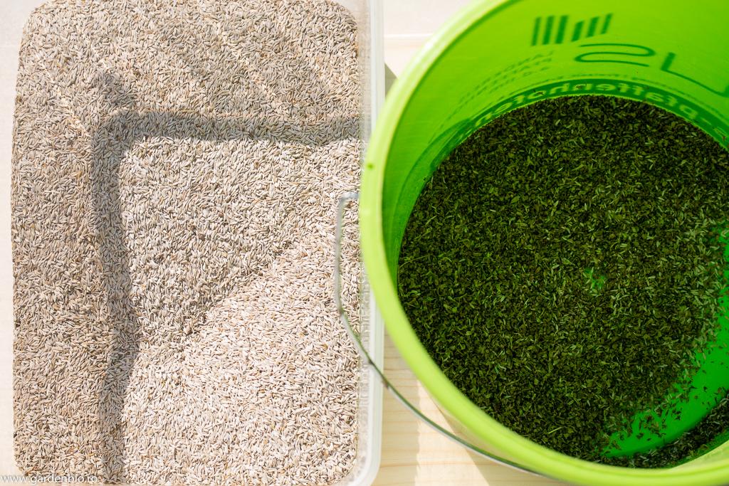 Seminţe de salată în stânga separate de pleava din dreapta
