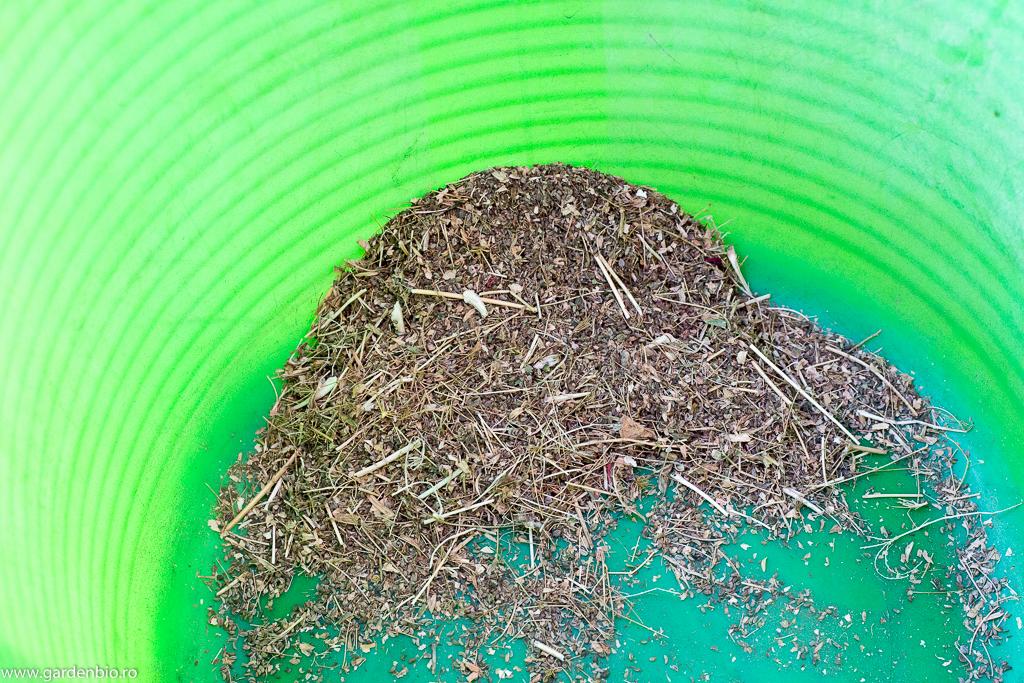 Primele teste - seminţe de pătrunjel