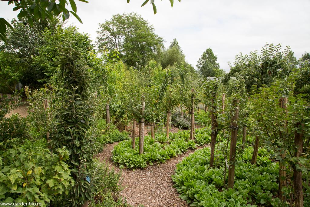Cultivare biointensivă la ferma Bec Hellouin - pomi fructiferi plantaţi des iar la bază se cultivă legume.
