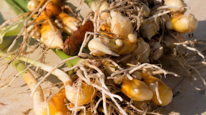 Cum să cultivaţi turmericul