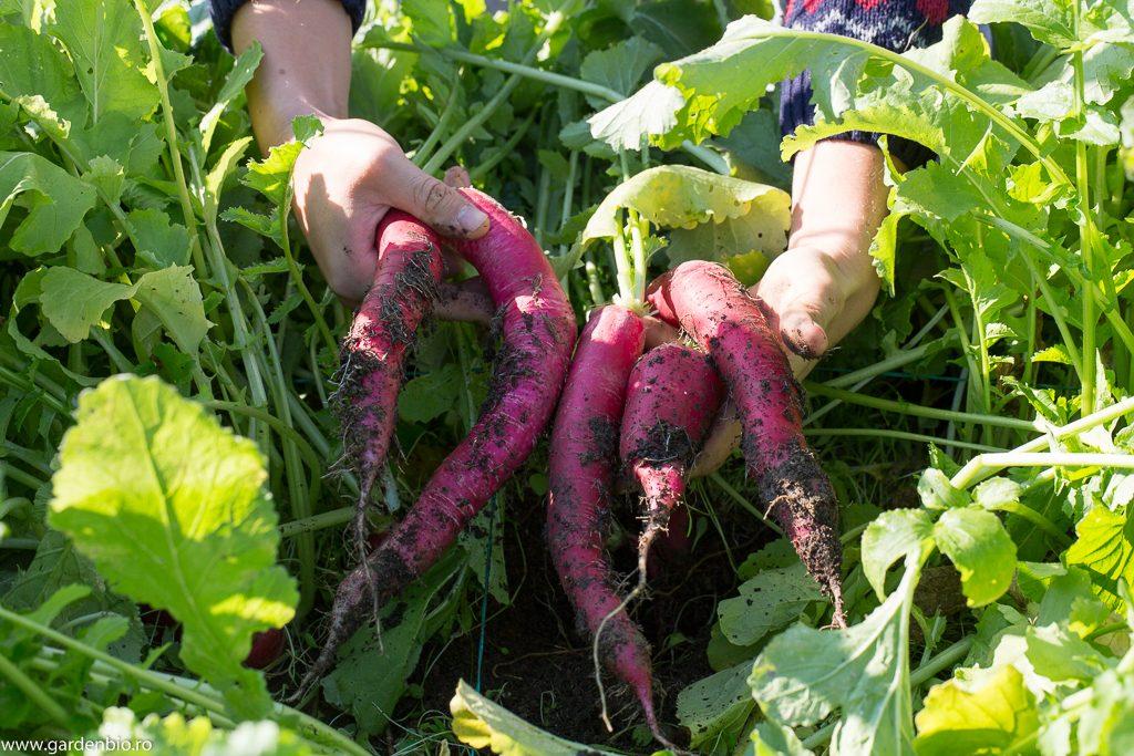 Pe suprafeţe mici obţinem recolte mari !