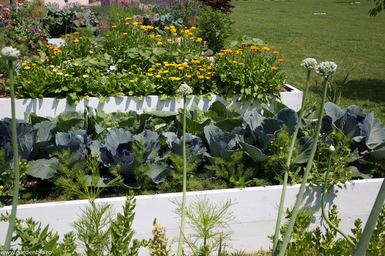 Biodiversitate, plante companion benefice, care se ajută reciproc, nu intră în concurenţă pentru resurse.