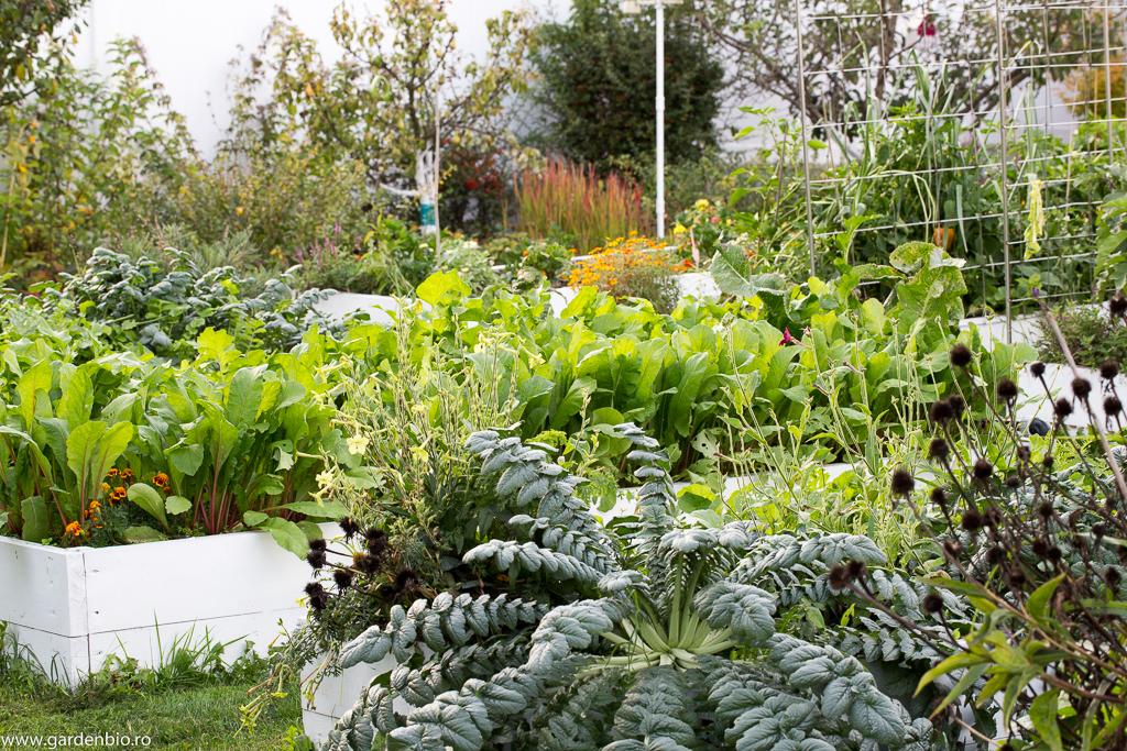 Grădina cultivată biointensiv
